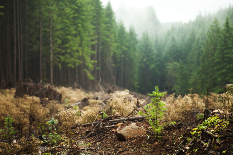 Section 4 a choisi Ecosia, un moteur de recherche qui plante.